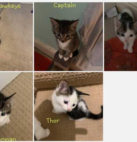 Thor, Hulk, Captain, Hawkeye and Ironman