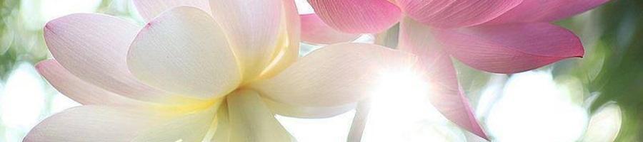 Heading lotus