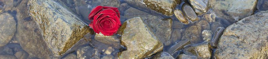 Heading rose rocks