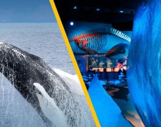 Whale Watching & Whales of Iceland Exhibition