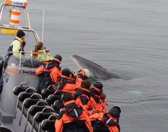 Reykjavík Premium Whale Watching