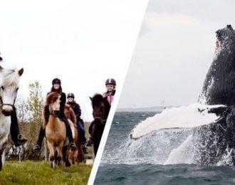 Akureyri Whales & Horses