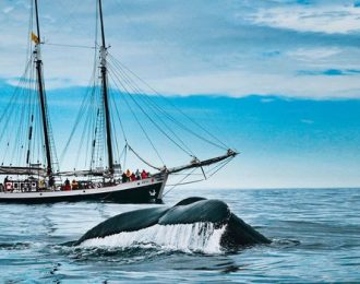 Silent Whale Watching (Carbon-Neutral)