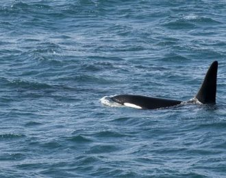 Akureyri Classic Whale Watching