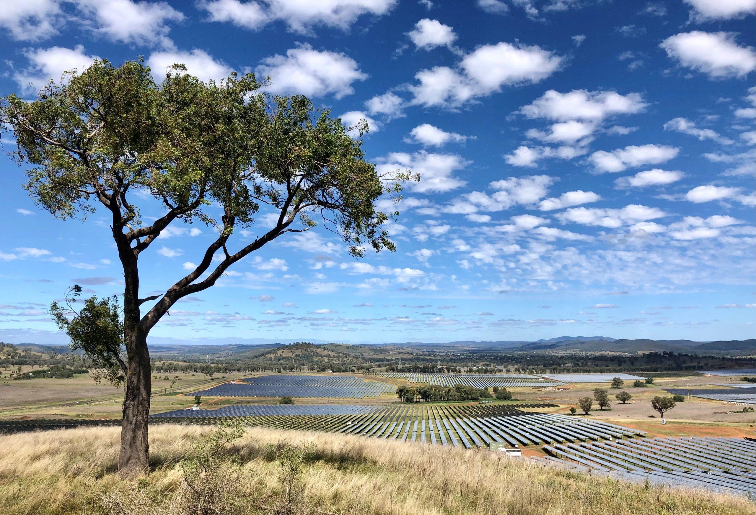 Wellington-tree-image-scaled