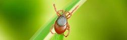 Lyme-Krankheit