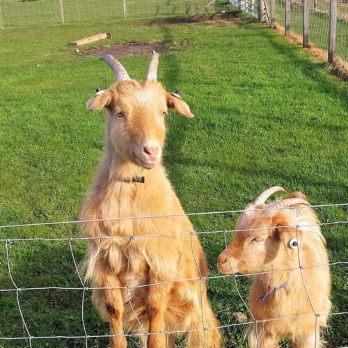 Help VSA Save Easter Anguston Farm