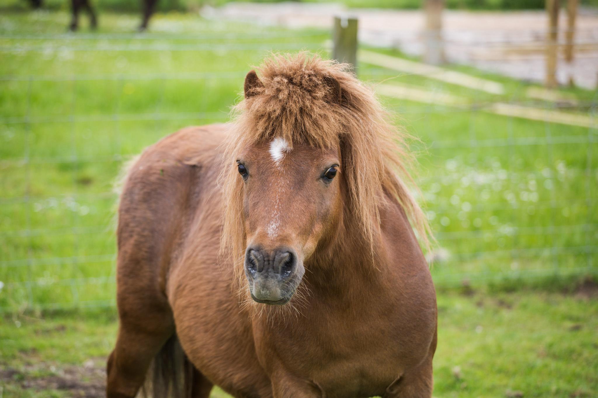 Pony-Cinnamon-005.jpg