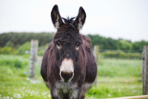 Donkey-Bertie-002.jpg