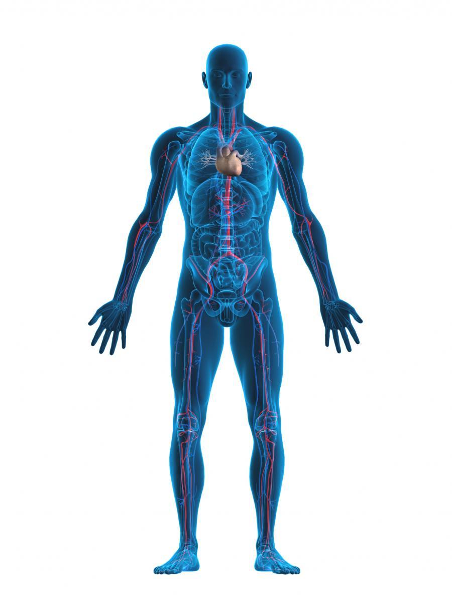 tegnet bilde av kroppen