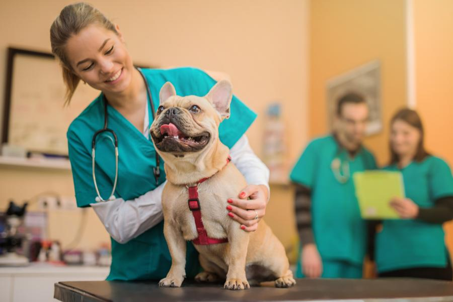 veterinærstudent