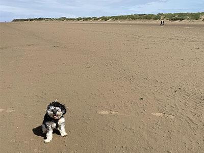 Small fluffy dog sitting on the beach
