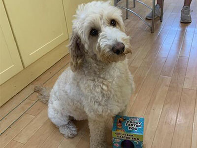 Cockapoo from BorrowMyDoggy posing with a dog friendly Easter egg
