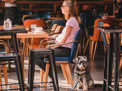Schnauzer dog sitting beside a lady in a open plan restaurant