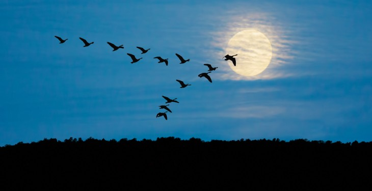 Wild swan in Derry tests positive for bird flu