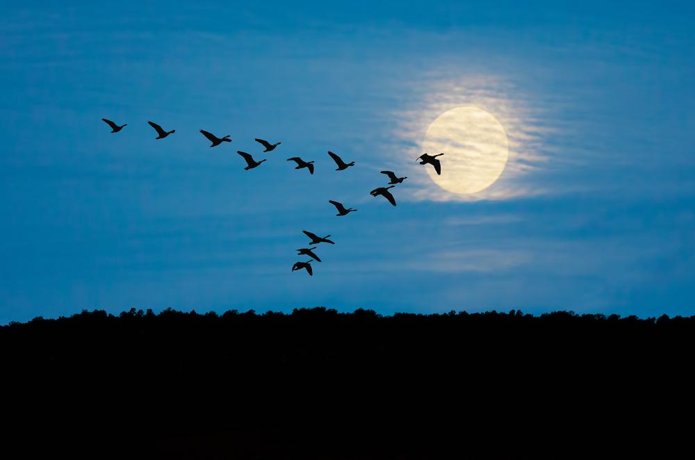bird flu text alert service big farmland bird count