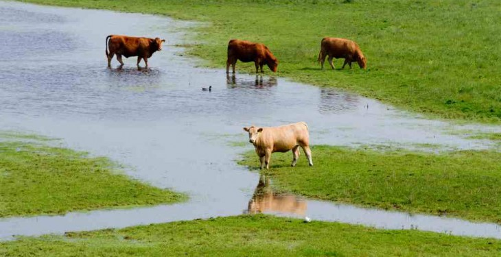 Support announced for farmers impacted by recent flooding