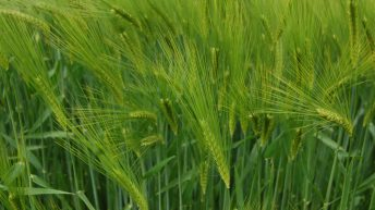Photosynthesis breakthrough achieved by Rothamsted scientists