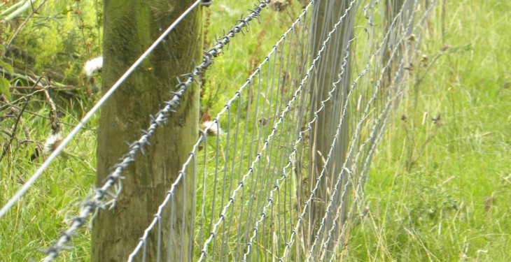 Sheep farmers still waiting on the approval of fencing for grant aid