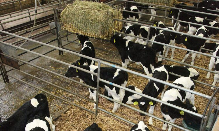 'Respiratory problems on the rise within calf rearing units'