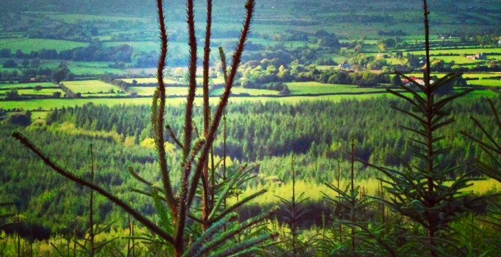 Harvard research suggests afforestation could slow climate change clock