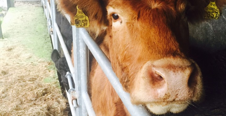 Northern Ireland's brucellosis compensation rates announced