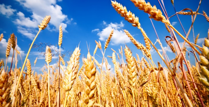 How is the 2018 Russian cereals harvest shaping up?