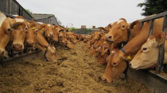 Dairy farmers can look forward to 'volatility proof' EU loans