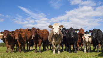 Advisory body to lay out fate of post-Brexit farm support
