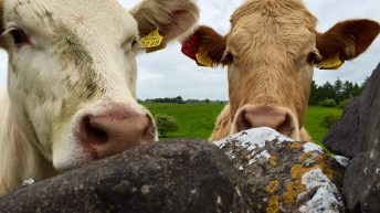 Agriculture Bill: Government 'myth-busts' on Scottish farm future