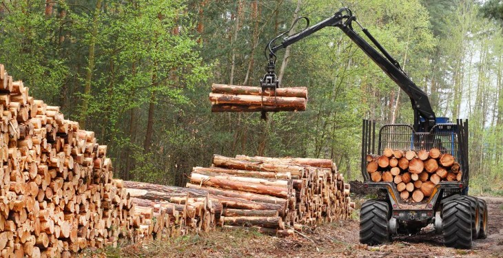 Don't undervalue your timber (Potential earnings of €25,000/ha)