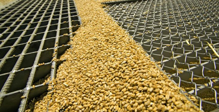 World grain production to reach record highs in 2016/2017
