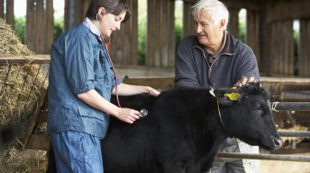 Farmers most likely to turn to vets for mental health support