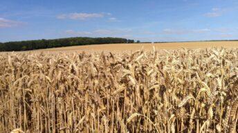 Student blog: Harvest 2016 means plenty of long hours on 2,500ha tillage farm