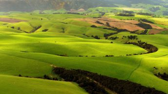 New Zealand's 'largest farmer' to sell off 10 farms totalling 11,650ha