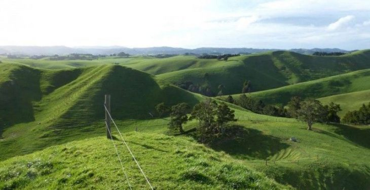 Pics: Would you be interested in this 500ha farm in New Zealand?