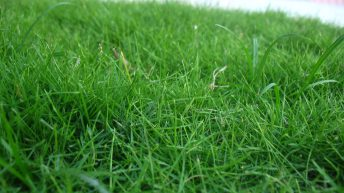 'Levels of grass utilisation are disappointingly low on beef and sheep farms'