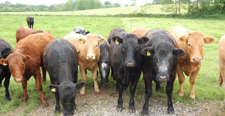 Scottish suckler beef scheme payments 'ahead of schedule'
