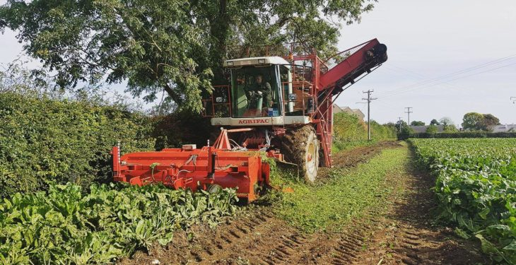 Self-propelled beet harvester in action at open event on Sunday