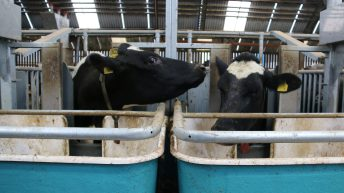 World Dairy Summit: The Co. Down herd in the top 1% of £PLI rankings