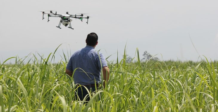 Can drones now be used to spot disease earlier in crops?
