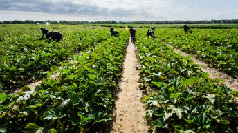 AHDB to wind down 'significant activities' in horticulture and potato sectors