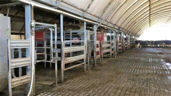 2019 Holstein Australia exchange winner announced
