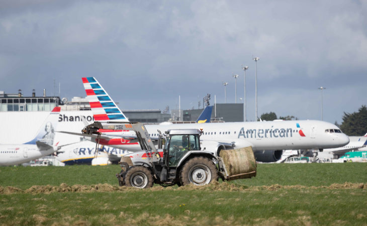 Video: Harvesting of up to 1,000 bales of silage takes place in Shannon Airport