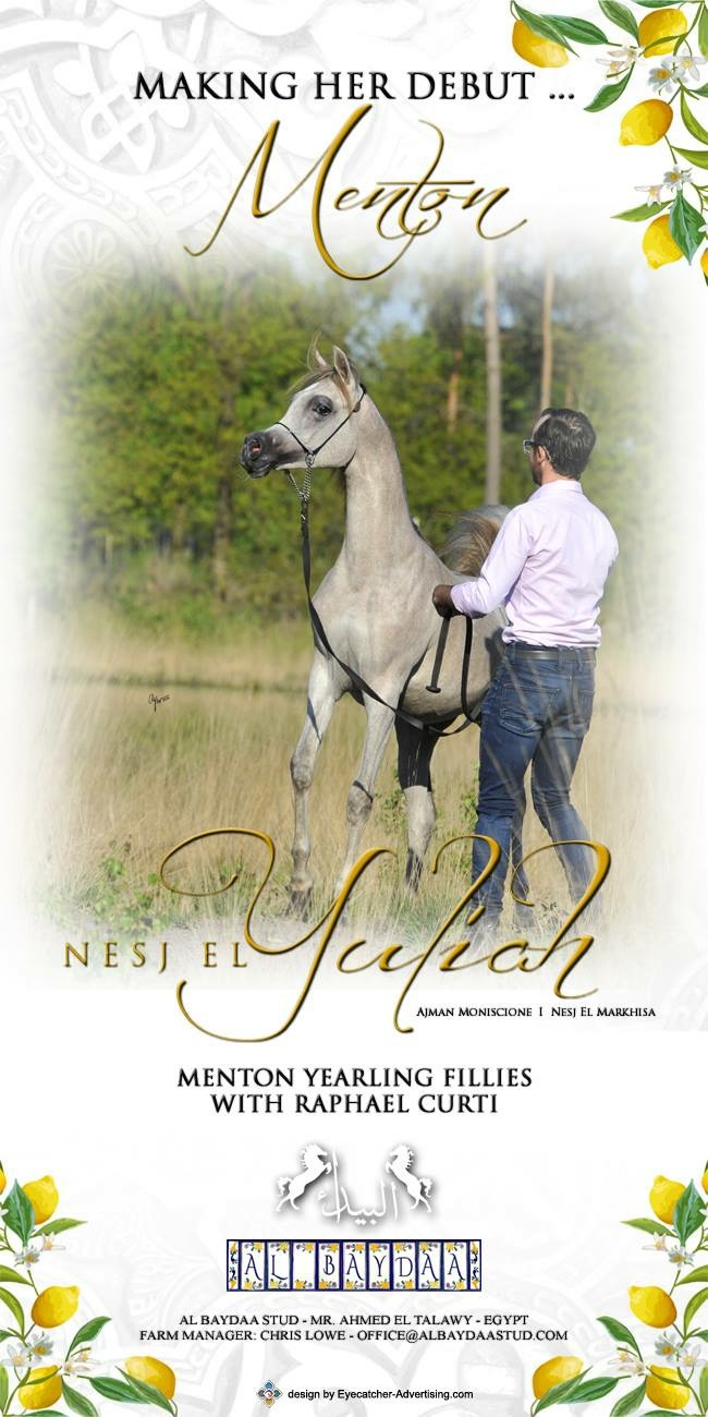 Nesj El Yuliah - Yearling Fillies - Raphael Curti