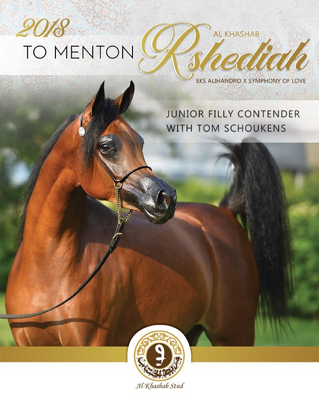 The Golden Filly - Rashediah Al Khashab
