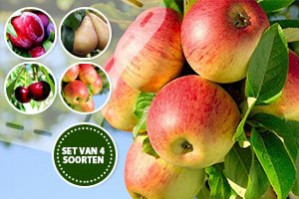 4 fruitbomen voor €29,95