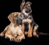 Cadeautje bij je aanmelding voor het PRO PLAN puppy coach programma
