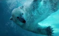 Entreetickets Wildlands Adventure Zoo Emmen voor €15