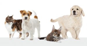 Vraag een gratis Kitten of Puppypakket aan